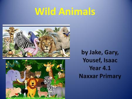 Wild Animals by Jake, Gary, Yousef, Isaac Year 4.1 Naxxar Primary.