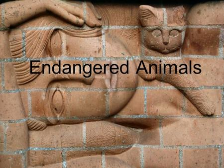 Endangered Animals. Ceramic Art Ceramics (art) Ceramics and ceramic art in the art world means artwork made out of clay bodies and fired into the hardened.