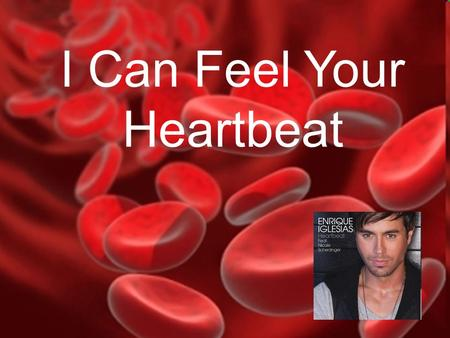 I Can Feel Your Heartbeat The Circulatory System I Can Feel Your Heartbeat.