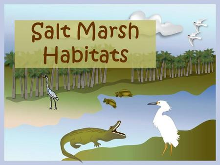 Salt Marsh Habitats. The grasses of a coastal lagoon or marsh serve as a habitat, providing food and shelter to a diverse array of organisms including.