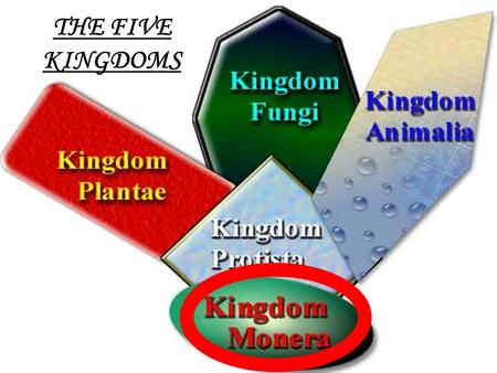 1 THE FIVE KINGDOMS. 2 Introduction to Bacteria 2 TYPES OF BACTERIA: Bacteria -Get food from an outside source Blue-green Bacteria -Make their own food.