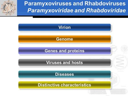 Paramyxoviruses and Rhabdoviruses Paramyxoviridae and Rhabdoviridae Virion Genome Genes and proteins Viruses and hosts Diseases Distinctive characteristics.