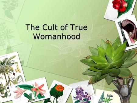 cult of true womanhood outline The culture of domesticity or cult of true womanhood is a term used by some  historians to describe what they consider to have been a prevailing value system .