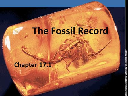 The Fossil Record Chapter 17.1. 0 The fossil record provides evidence about the history of life on Earth. It also shows how different groups of organisms,