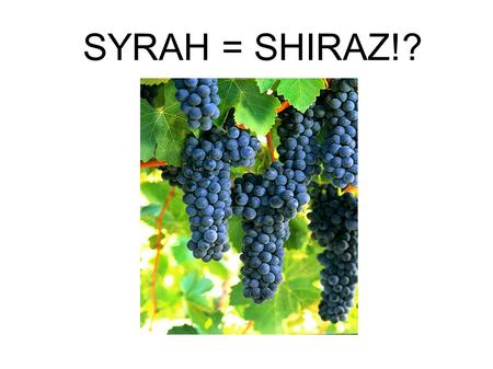 SYRAH = SHIRAZ!?. Menu Pre-taster: Esk Valley Verdehlo, 2009 Madeira, and beyond... 2 vineyard blend: gravel meets silty gravel, 11 year old vines. 60%
