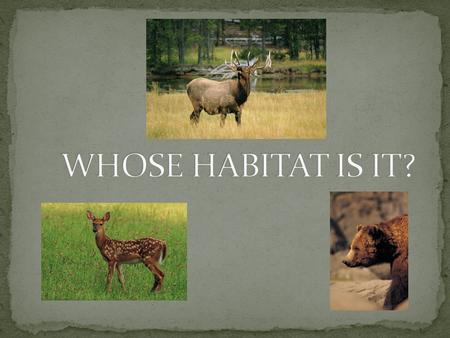 WHOSE HABITAT IS IT?.