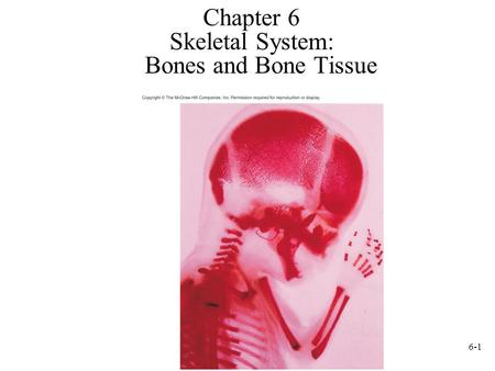 6-1 Chapter 6 Skeletal System: Bones and Bone Tissue.