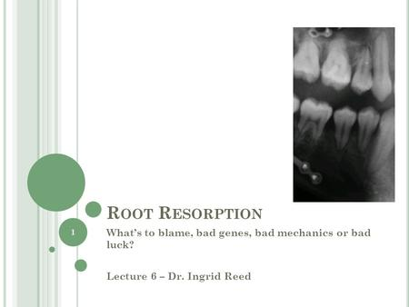 R OOT R ESORPTION Whats to blame, bad genes, bad mechanics or bad luck? Lecture 6 – Dr. Ingrid Reed 1.