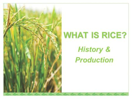 WHAT IS RICE? History & Production.