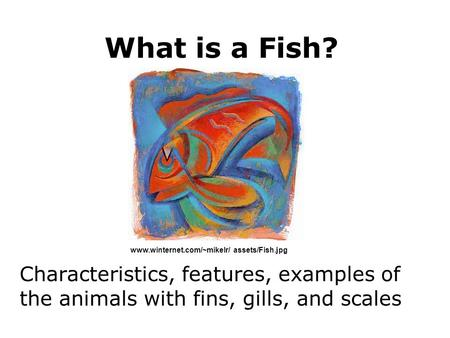 Kingdom animalia phylum chordata subphylum vertebrata for Examples of fish