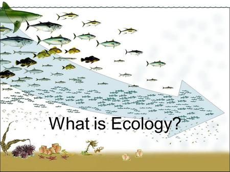 What is Ecology?. * Ecology is the study of interactions among organisms and between organisms and their environment.