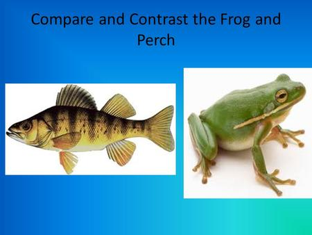 Compare and Contrast the Frog and Perch. What is an Animal? Chapter 25.1.