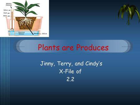 Plants are Produces Jinny, Terry, and Cindys X-File of 2.2.