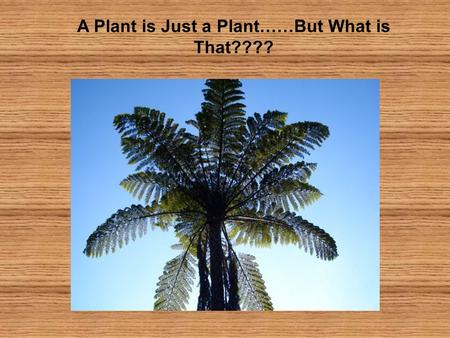 A Plant is Just a Plant……But What is That????. Consider: -What is a non-scientific description of a plant? -How often do you discuss a plant in your everyday.