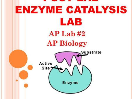 AP Biology enzyme cataylst lab report Essay