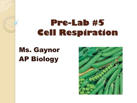 Pre-Lab #5 Cell Respiration Ms. Gaynor AP Biology.