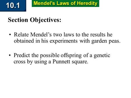 10.1 Section Objectives – page 253 Relate Mendels two laws to the results he obtained in his experiments with garden peas. Section Objectives: Predict.