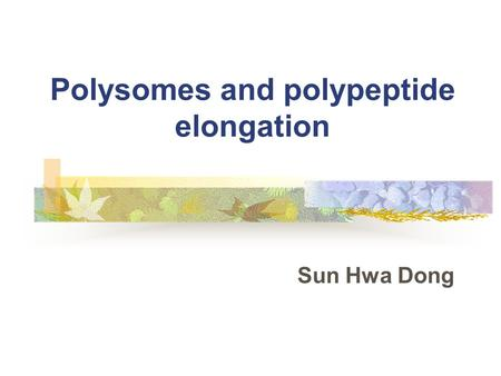 Polysomes and polypeptide elongation Sun Hwa Dong.