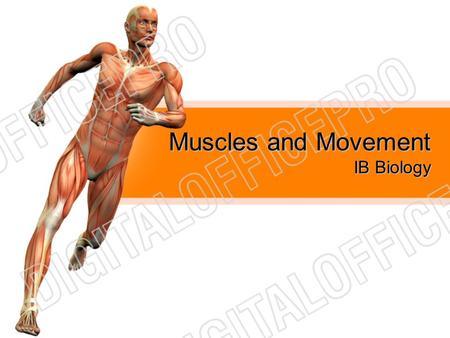 Muscles and Movement IB Biology.
