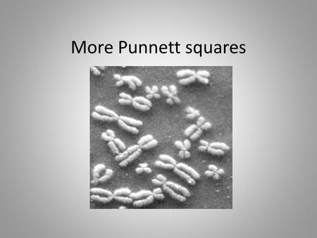 More Punnett squares. Complete Dominance Involves dominant and recessive alleles dominant allele always overpowers the recessive allele in appearance.