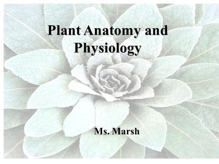 Plant Anatomy and Physiology Ms. Marsh. Today… Plant Anatomy –Cells –Tissues –Organs Plant Physiology –Water & sugar transport –Plant hormones.