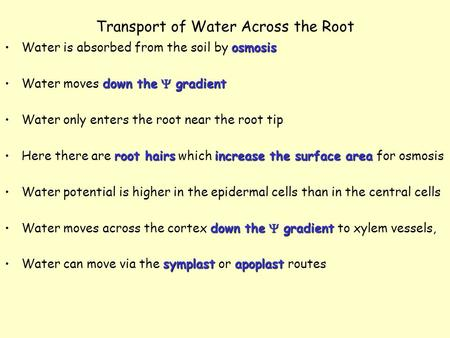 Transport of Water Across the Root osmosisWater is absorbed from the soil by osmosis down the gradientWater moves down the gradient Water only enters the.