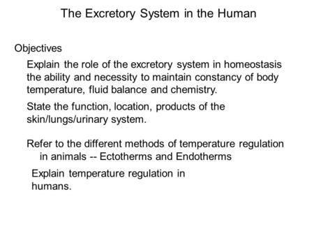 Objectives The Excretory System in the Human Explain the role of the excretory system in homeostasis the ability and necessity to maintain constancy of.