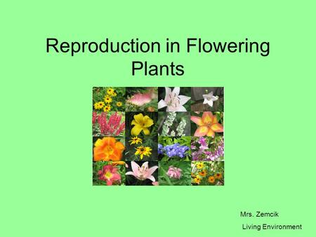 Reproduction in Flowering Plants