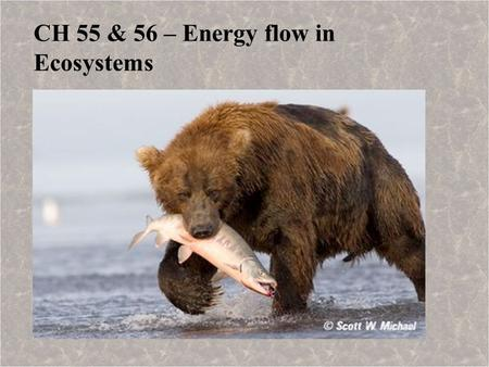 CH 55 & 56 – Energy flow in Ecosystems. Overview: Ecosystems An ecosystem consists of all the organisms living in a community, as well as the abiotic.