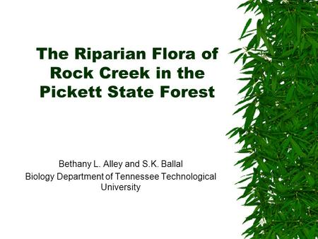 The Riparian Flora of Rock Creek in the Pickett State Forest Bethany L. Alley and S.K. Ballal Biology Department of Tennessee Technological University.