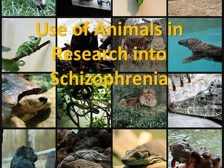 Use of Animals in Research into Schizophrenia. Why use animals? Basically, in order to do research you wouldnt be able to do with humans for ethical reasons.