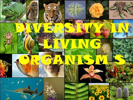 DIVERSITY IN LIVING ORGANISM S Basis of Classification Why do we classify things? * Classification provides scientists and students a way to sort and.