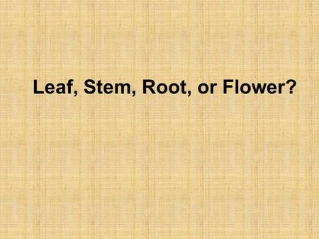Leaf, Stem, Root, or Flower?