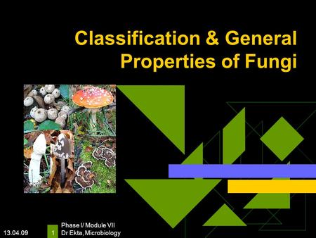 13.04.09 Phase I/ Module VII Dr Ekta, Microbiology 1 Classification & General Properties of Fungi.
