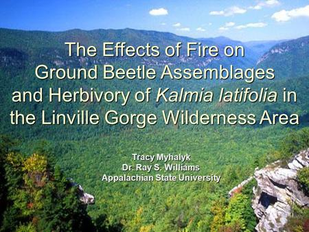 The Effects of Fire on Ground Beetle Assemblages and Herbivory of Kalmia latifolia in the Linville Gorge Wilderness Area Tracy Myhalyk Dr. Ray S. Williams.