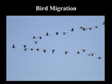 Bird Migration. Migration is the seasonal movement of animals between geographically separate places Painted Bunting on breeding grounds in Texas.