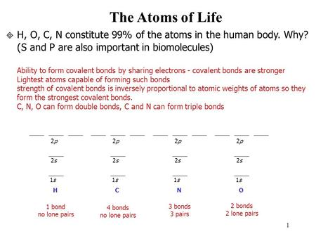 1 The Atoms of Life H, O, C, N constitute 99% of the atoms in the human body. Why? ( S and P are also important in biomolecules) Ability to form covalent.