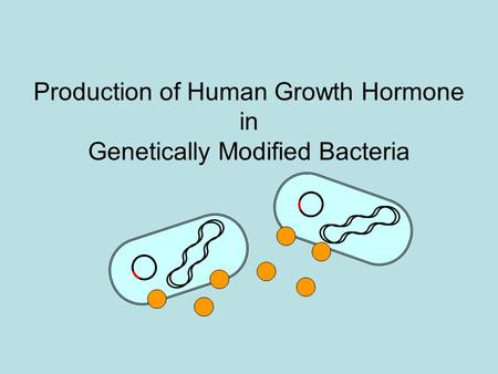 Production of Human Growth Hormone in Genetically Modified Bacteria.