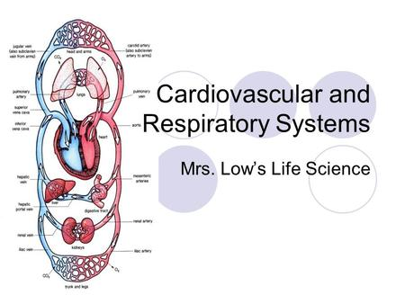 Cardiovascular and Respiratory Systems Mrs. Lows Life Science.