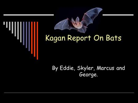 Kagan Report On Bats By Eddie, Skyler, Marcus and George.