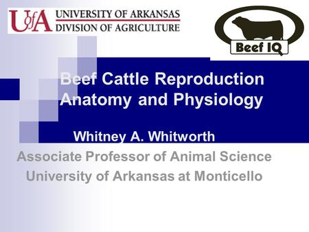 Beef Cattle Reproduction Anatomy and Physiology Whitney A. Whitworth Associate Professor of Animal Science University of Arkansas at Monticello.