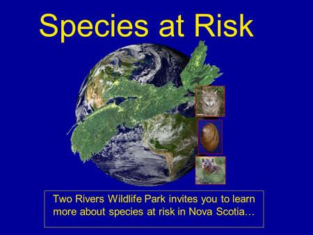 Species at Risk Two Rivers Wildlife Park invites you to learn more about species at risk in Nova Scotia…