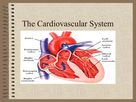 The Cardiovascular System. Amazing Heart Facts Your heart is about the same size as your fist. An average adult body contains about five quarts of blood.