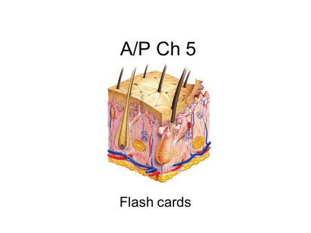 A/P Ch 5 Flash cards.