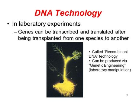 DNA Technology In laboratory experiments –Genes can be transcribed and translated after being transplanted from one species to another Called Recombinant.