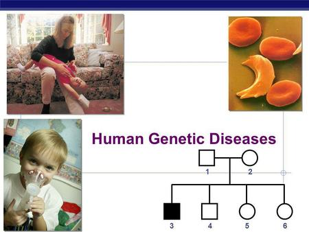 AP Biology 2006-2007 Human Genetic Diseases 12 3456.