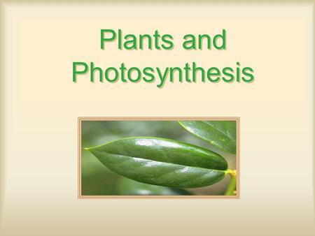 Plants and Photosynthesis. Photosynthesis Organisms –Autotrophs: Self Feeders Photo-: Light Chemo-: Oxidize inorganics (Ex: Sulfur, Ammonia), unique.