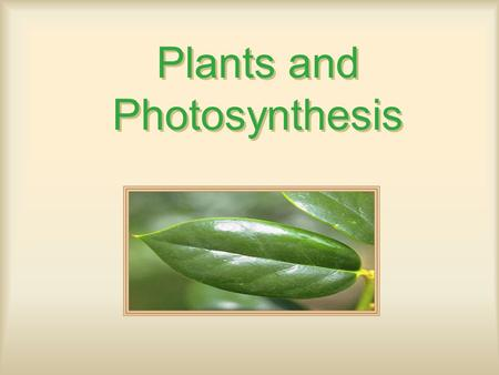 Plants and Photosynthesis. Photosynthesis Organisms –Autotrophs: Self Feeders Photo-: Light Chemo-: Oxidize inorganics (Ex: Sulfur, Ammonia), unique to.