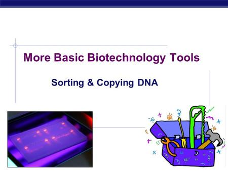 AP Biology 2007-2008 More Basic Biotechnology Tools Sorting & Copying DNA.