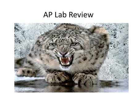 AP Lab Review.